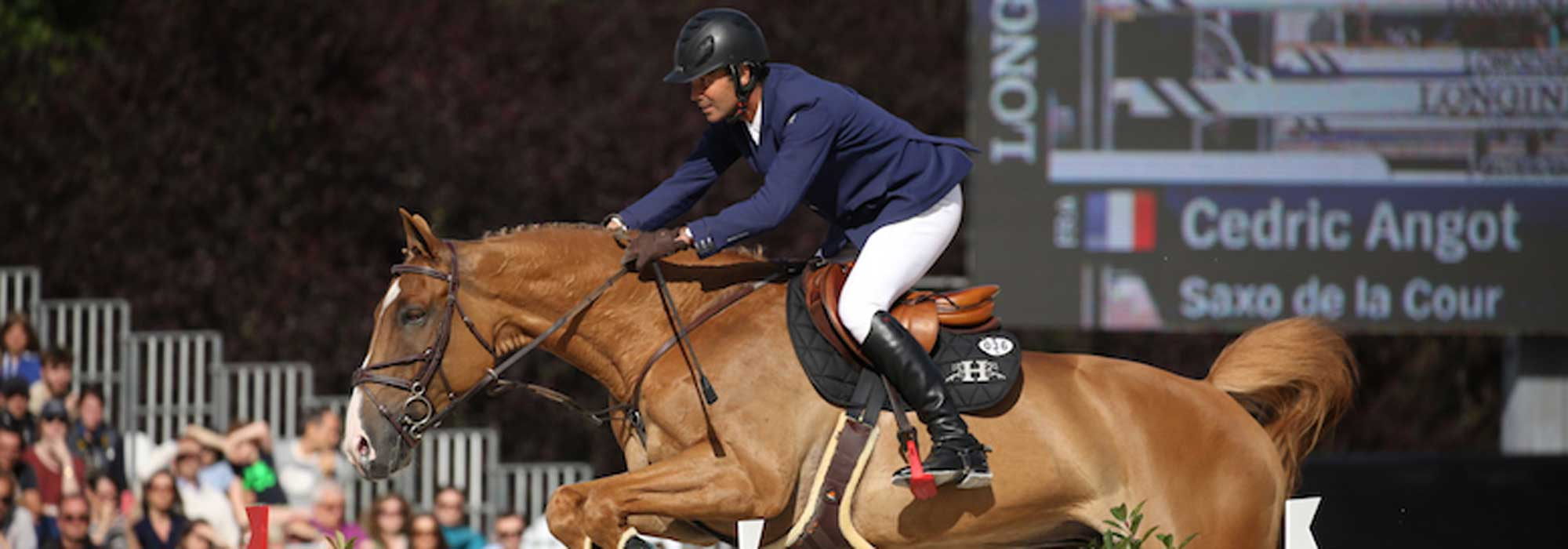 Cédric Angot cavalier Horsefeed
